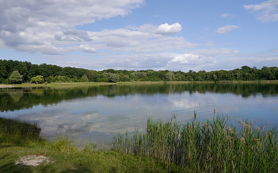 Nymphensee in Brieselang