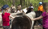Pony- und Eselwanderung