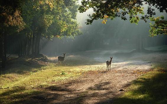 Wildgehege Glauer Tal mit NaturParkZentrum