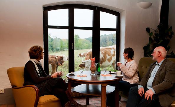 Kuh-Kino in der Moorscheune, Foto: Jens Wegner
