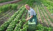 Gärtner bei der Arbeit, Foto: Bio-Gärtnerei Gemüsewerk