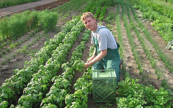 Bio-Gärtnerei Gemüsewerk - biologische Gemüse, Käuter und Obst