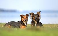 Minimi und Fenja - unsere Therapiehunde