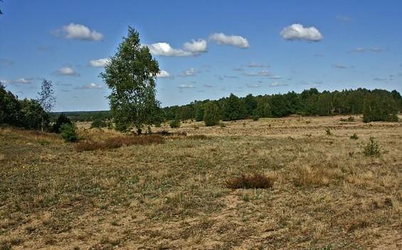 Rundwanderweg Döberitzer Heide
