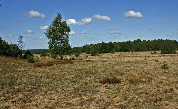 Naturlandschaft Döberitzer Heide, Foto: Ralf Donat