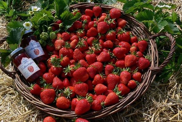 Erdbeeren aus Klaistow, Foto: Buschmann & Winkelmann GmbH