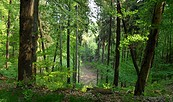 Kammweg © Tourismusverein Seenland Oder-Spree e.V.