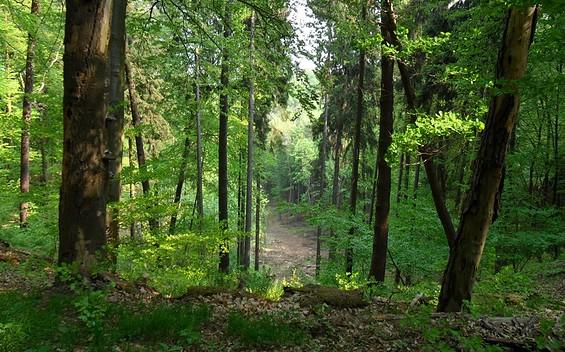 """6. Etappe """"66-Seen-Wanderweg"""": Stille und Idylle"""