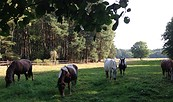 Mit Pferden wandern!