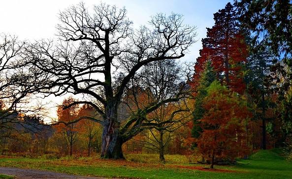 Gutspark Gadow, Foto: Schloss Gadow GbR