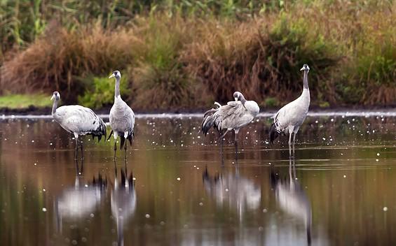 Vogelbeobachtung im Heinz Sielmann Natur-Erlebniszentrum Wanninchen