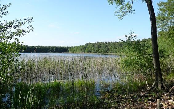 Wildnispfad auf den Stiftungsflächen Lieberose