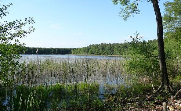 See am Wildnispfad, Foto: Stiftung Naturlandschaften Brandenburg
