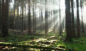 Wald bei Gut Wolletz