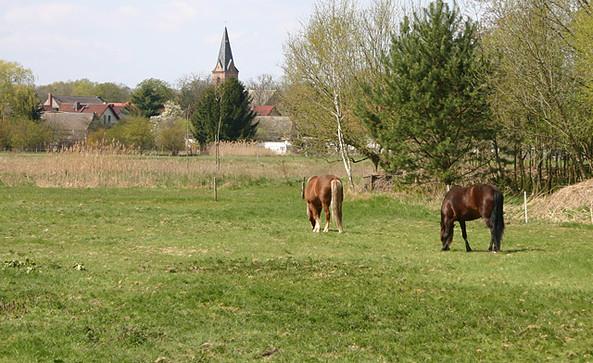 Pferde auf der Koppel bei Prieros, Foto: Tourismusverband Dahme-Seen e.V.