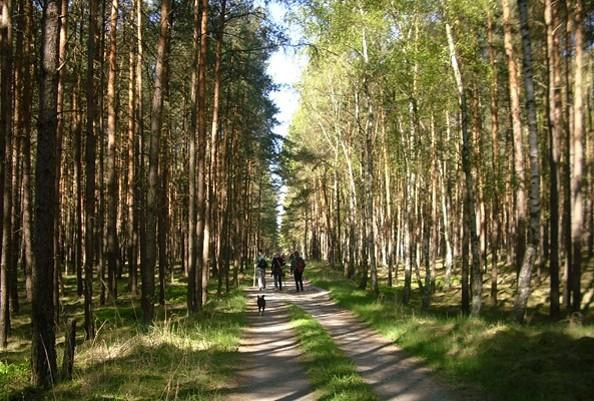 Wald bei Bad Wilsnack, Foto: Tourismusverband Prignitz e.V.