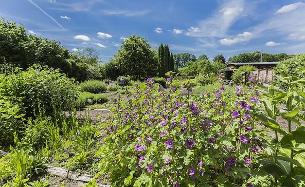 Klosterkräutergarten Himmelpfort, Foto: TMB-Fotoarchiv/Steffen Lehmann