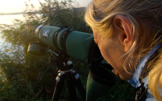Ein unvergessliches Erlebnis - Kranichbeobachtung am Gülper See