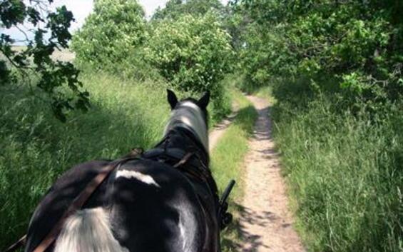 Naturerlebnis pur - mit Pferd und Wagen (3 Nächte)