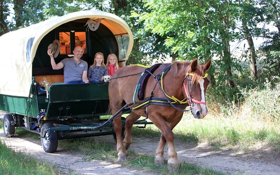 Naturerlebnis pur - mit Pferd und Wagen (6 Nächte)