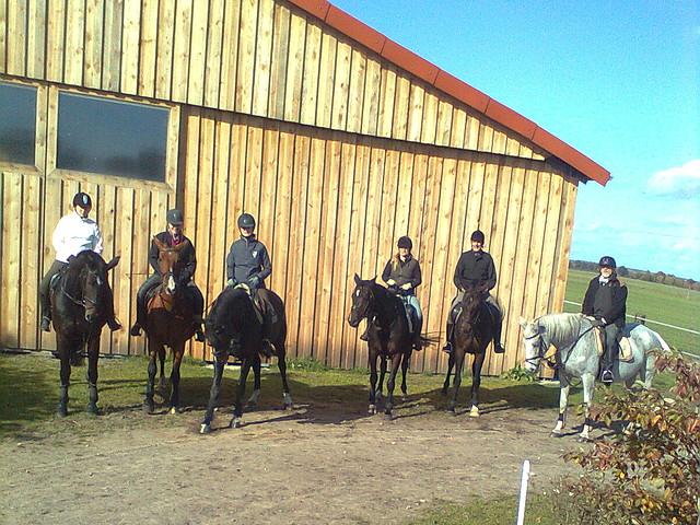 Pferdezucht- und Pensionsbetrieb Goldbeck