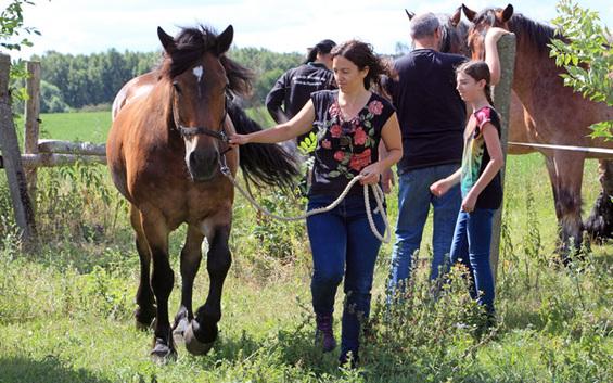 Wandern mit dem Pferd